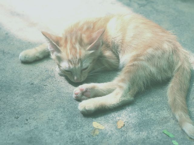のんびり猫が庭で昼寝をする状況はダメ