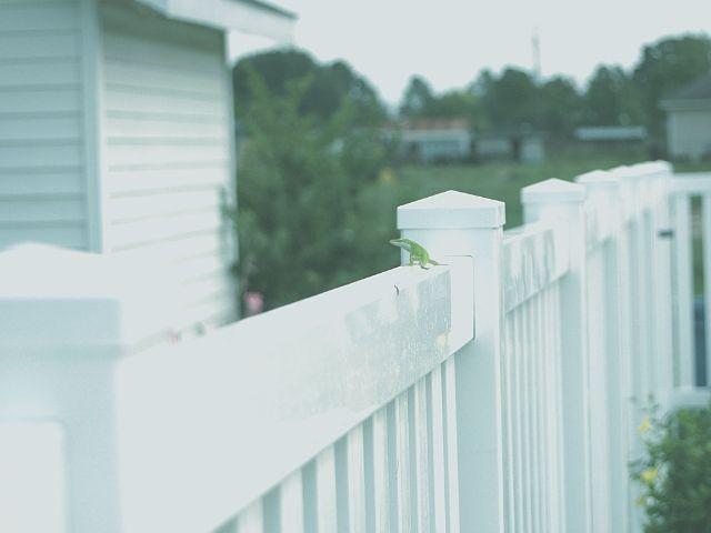 フェンスで物理的に猫が入れない状況にする