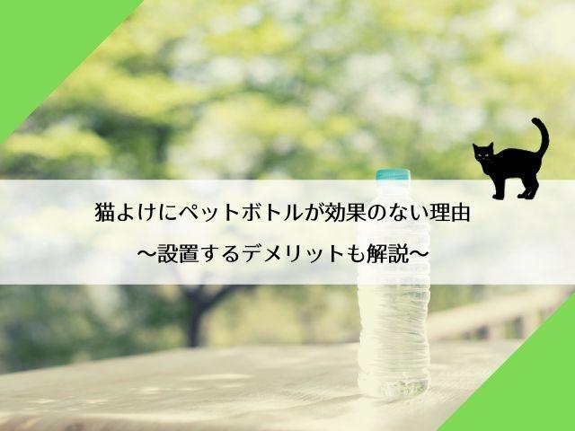 猫よけにペットボトルが効果のない理由