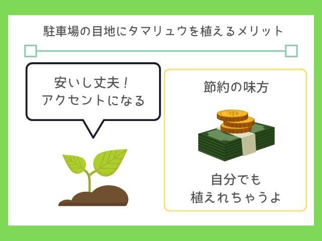 タマリュウは定番の外構に使える植物