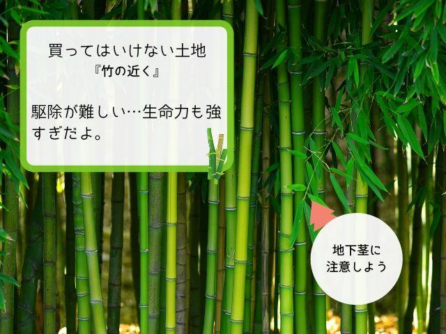 竹の近くは庭が壊滅するかも